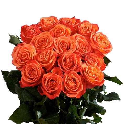 globalrose 2 dozen orange roses vars 2 dozen orange roses the home depot