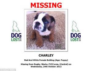 missing why dogs go missing and how to find them books caign rescues stolen puppy snatched from a