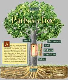 what does a tree to do with parts of tree image