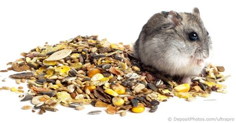 hamster mix pellets