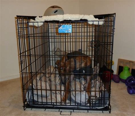How To Make Crate Comfortable by Separation Anxiety Ne Ohio Greyhound Rescue Inc