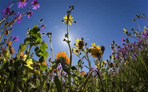 fiore della rinascita e tempo di rinascere the bach flowers
