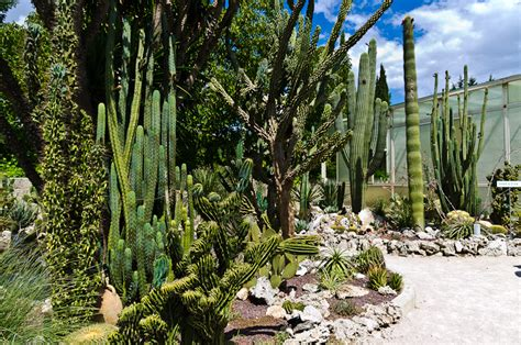 giardino botanico la cutura pentaxiani leggi argomento la cutura