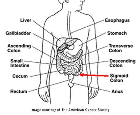 diagram of the colon small intestine and colon diagram car interior design