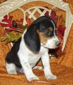 free puppies in columbus ohio dogs athens oh free classified ads