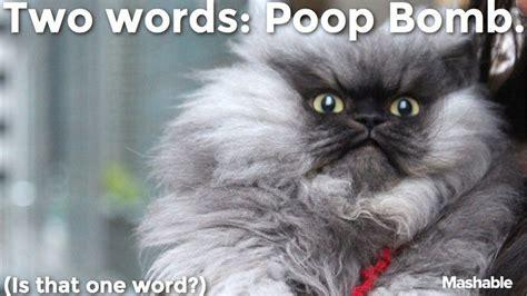Colonel Meow Memes - memes danielsternklar com