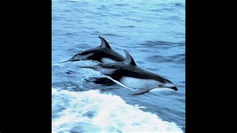 fotos animales marinos animales acu 225 ticos animales marinos youtube