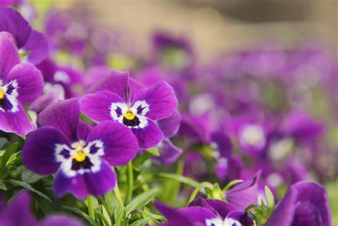 7 Easy Plants To Grow by 10 Easy To Grow Plants For Time Gardeners Mental Floss