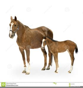 mare clipart mare and foal clipart free images at clker vector