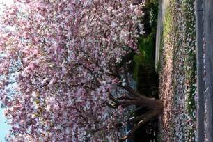 names of flowering trees images