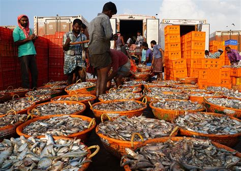 rameswaram fishing harbour and boat jetty the deadly fight over dwindling fish stocks between sri