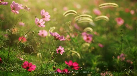 wallpaper desktop garden flowers flower garden wallpaper 60080