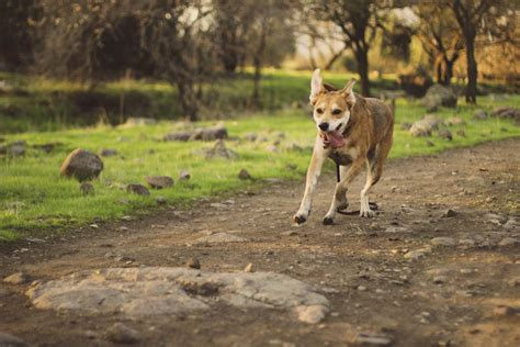 best dogs in america the best parks in america to visit with your pup zencrate