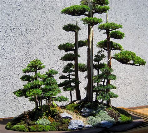architect design bonsai garden