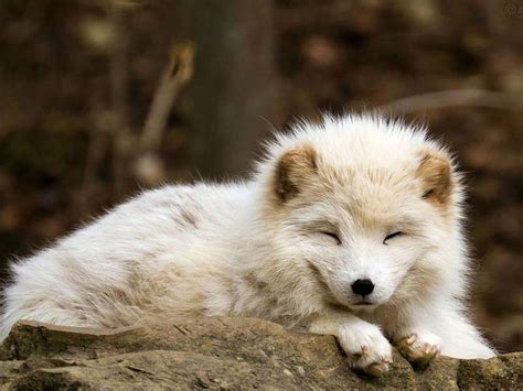 elenco animali da cortile animali onnivori l elenco completo degli esemplari foto