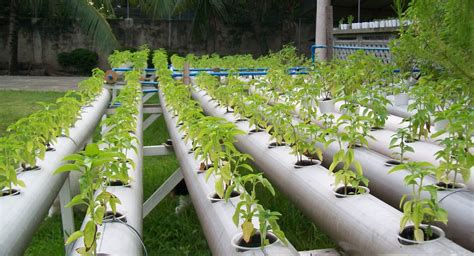 home hydroponics organic hydroponics could become the future of growing