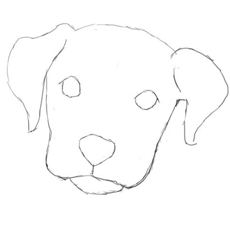 drawing of a puppy learn how to draw a in photoshop