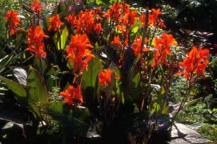 Planting Climbing Roses - canna rhs gardening