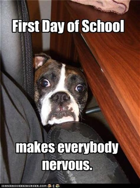 First Day Of School Funny Memes - 35 best classroom memes images on pinterest