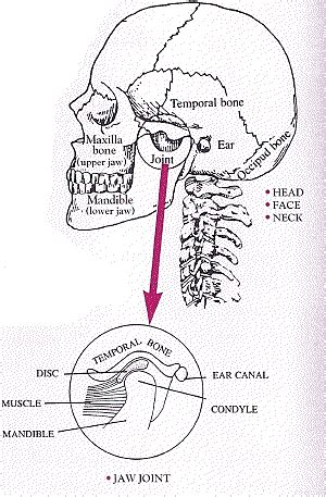 Jaw Joints Amp Allied Musculo Skeletal Disorder Foundation Inc