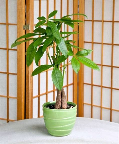 Bedroom Safe Plants Feng Shui Plants For Harmony And Positive Energy In The