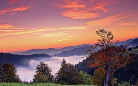 sunset mountains trees fall landscape autumn fog sunrise