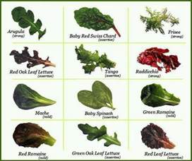 lettuce varieties interesting pinterest salads and green