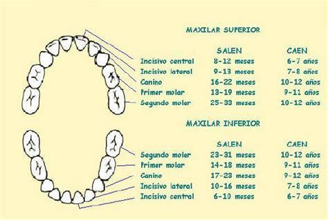 imagenes dientes temporales laboratorista dental june 2006