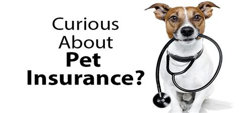 pet insurance for dogs the about pet insurance benadryl for dogs