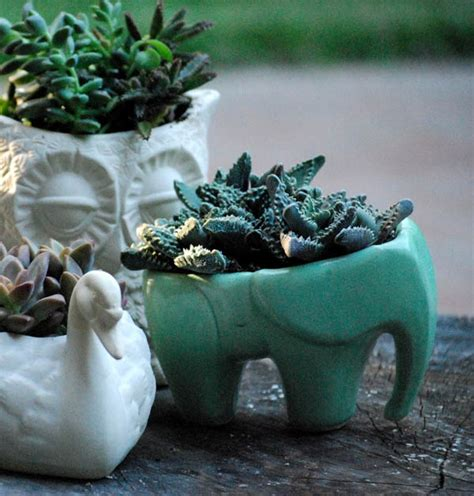 Elm Home Decor by 20 Pretty Pots To Refresh Your Succulents