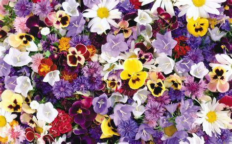 wallpaper flower mix pack 270 wallpaper fleurs gratuit fond d ecran gratuit