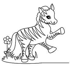 baby zebra coloring page www pixshark com images