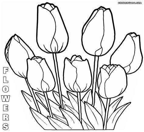 Flower Color Sheet by Flower Coloring Pages Coloring Pages To And Print