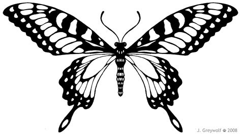 Butterflies Images Outline by Butterfly Outline Template Cliparts Co