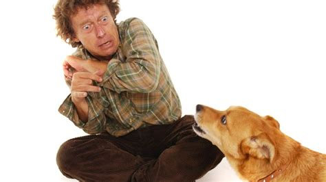 phobia of dogs top 10 most common phobias healthtopia