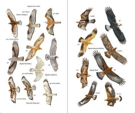 aves de espa 241 a birds of spain eduardo de juana juan m varela sim 243 nhbs book shop aves de espa 241 a lynx edicions