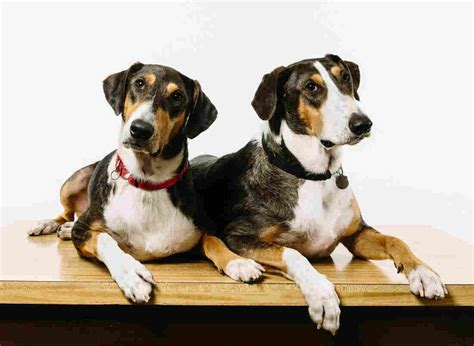 cloning dogs cloning your for a mere 100 000 health news npr