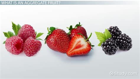 Computer Engineering Resume Examples by Aggregate Fruit Definition Amp Examples Video Amp Lesson