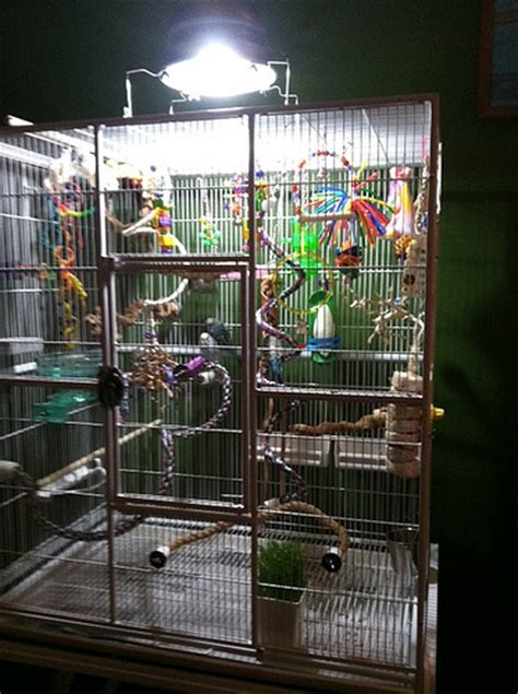 uv light for birds budgie cages how to set up your parakeet s cage with toys