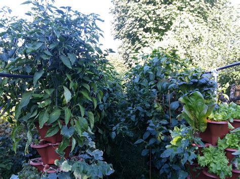 vertical garden update for august 26 2017 grow shop
