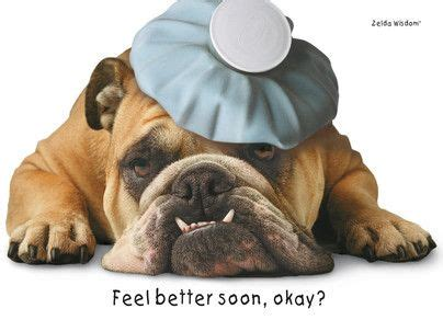 feel better puppy fatigued bulldog get well card cheer up