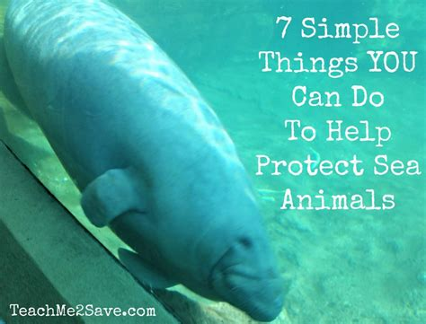 7 Things To Do When You Are Iii by 7 Simple Things You Can Do To Help Protect Sea Animals