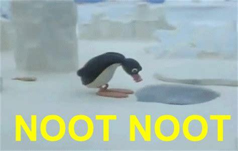 Noot Noot Meme - noot noot noot noot know your meme