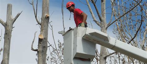service denver tree serivce options for denver co