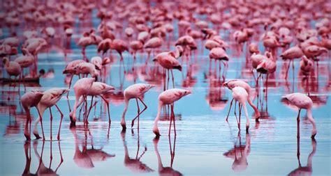 flamingo wallpaper nyc bing wallpaper archive