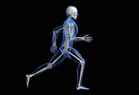 Kerangka Manusia fakta seputar kerangka tulang dan tengkorak manusia ciricara