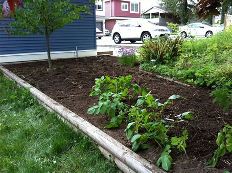 House Vegetable Garden Vegetable Garden Home Improvement