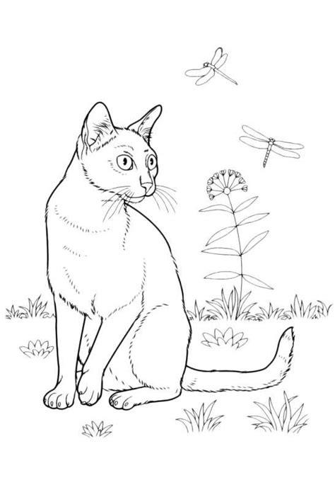 disegni di giardini da colorare gatti da colorare gatto in giardino da stare e colorare