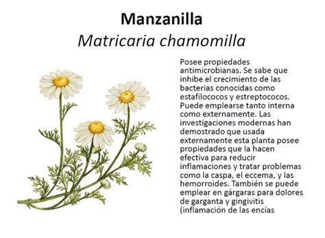 html imagenes propiedades academia citogim algunas plantas medicinales y sus