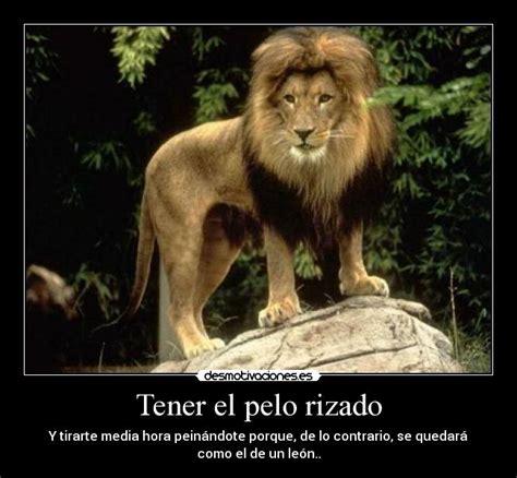 imagenes de leones chidos tener el pelo rizado desmotivaciones